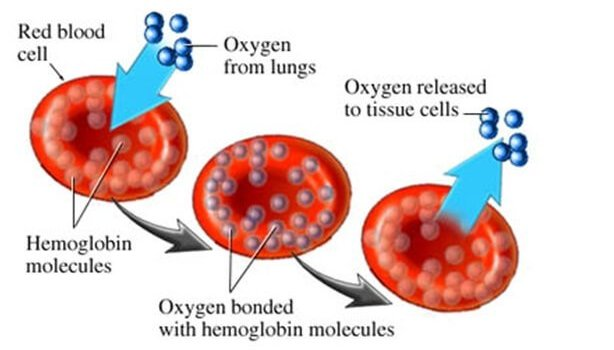 Drinking Too Much Water Hypotonic Effect On Cells