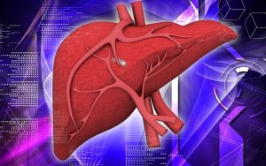 bigstock-liver-58317608-min