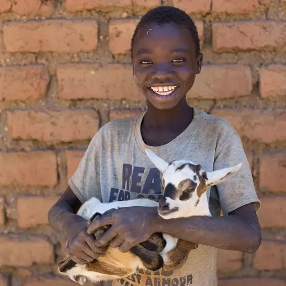 Charity Christmas gift for Africa goat