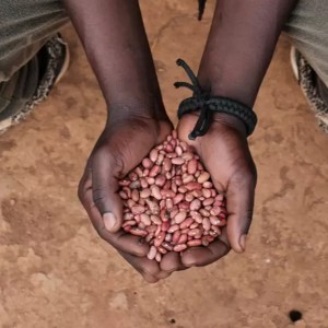 Charity Christmas gift for Africa seeds