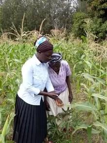 Rosalind and Emiliana inspecting maize.