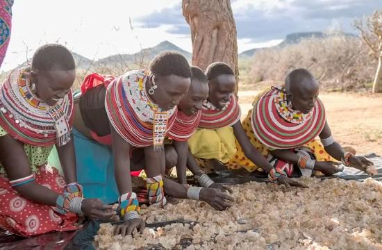 ACACIA TREES CREATE INCOME IN KENYA
