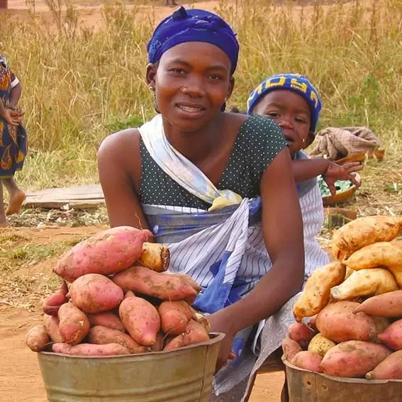 Christmas gift for Africa Sweet Potatoes