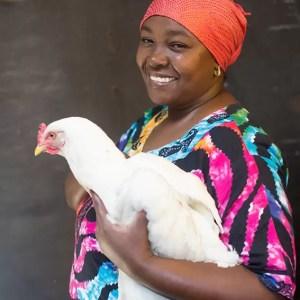 Christmas gift for Africa chickens