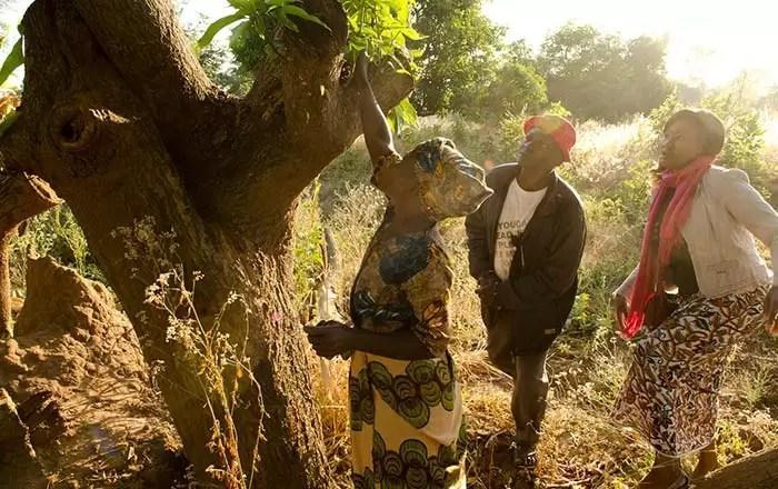 malawi-mango