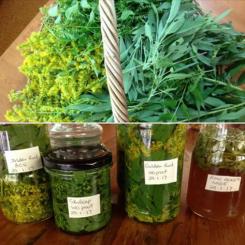 Bunnings - Using Herbs in your Everyday Life @ Bunnings Warehouse | Nerang | Queensland | Australia