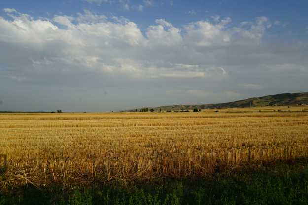 A calming picture of a wheatfield somewhere near Aghdash
