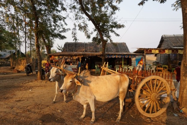 Ox cart on the road to Bagan