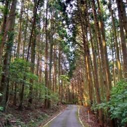 Monkey infested backroads on Shikoku