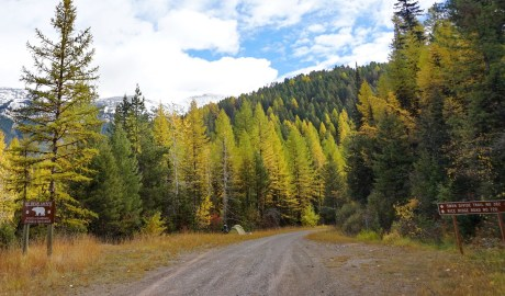 I camped at the side of this road on the Swan Divide, no cars came past the whole 24 hours I was in these woods.