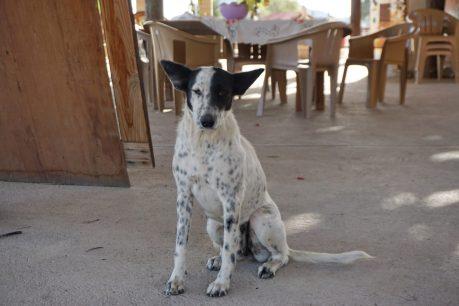 Night watch dog at Rancho Escondido