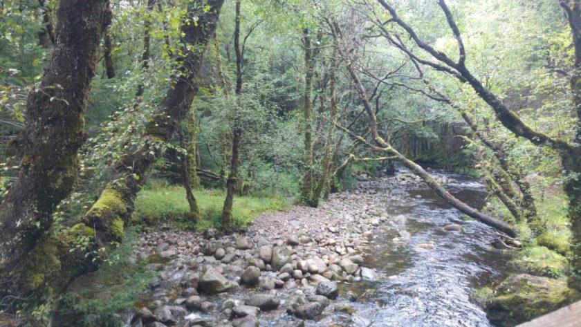 photo of woodland stream near Ben Nevis