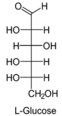 Open chain structure(Fisher model): L-Glucose