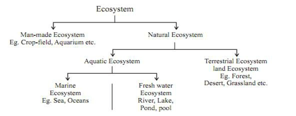 Eco System & Its Components