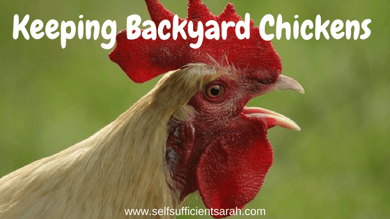 Keeping Backyard Chickens. Posted On 06/03/2018 06/03/2018 Author