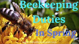 Beekeeping duties in the spring
