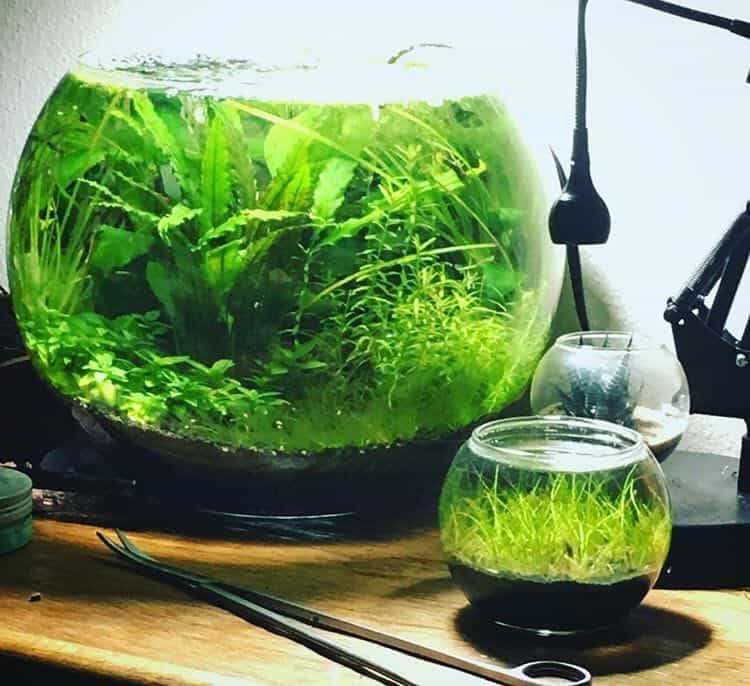 how to make a self sustaining ecosystem in a jar