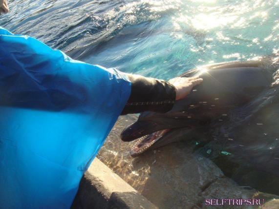 Dolphin. SeaWorld. San Diego