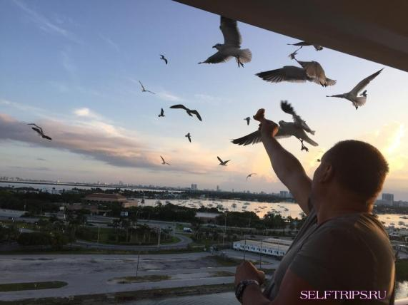 Высадка с судна MSC Divina  в Майами