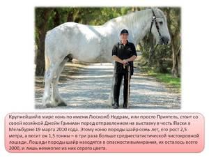 englische pferdenamen