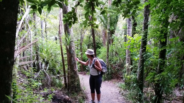 Enjoying bushwalk at Waitakere ranges regional park
