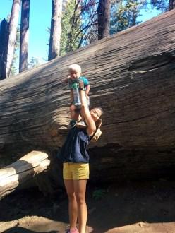 The giant sequoias were really impressive.