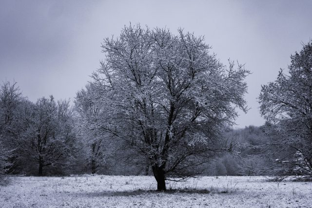 photo of snow-covered tree