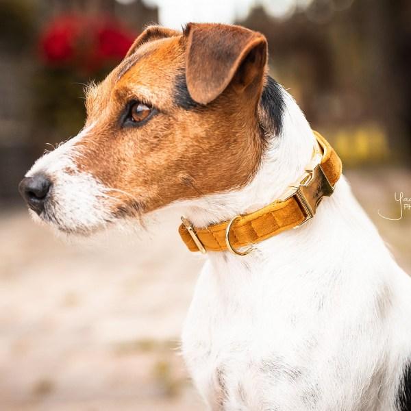 Collier chien Velvet Moutarde Kentucky Horsewear Dogwear
