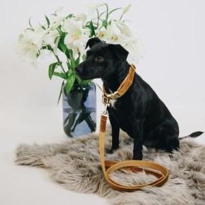 Laisse Chien Velvet Moutarde 120cm Kentucky Horsewear Dogwear