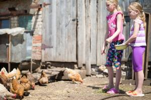 Inspired Homes Hobby-Farm-Chickens-300x200 Hobby Farms Lifestyle  Hobby Farm