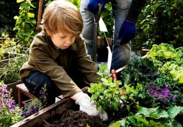 Inspired Homes Hobby-Farm-Plants Hobby Farms Lifestyle  Hobby Farm