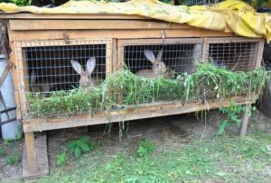 Inspired Homes Hobby-Farm-Rabbits-300x203 Hobby Farms Lifestyle  Hobby Farm