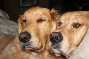 Kodi & Rudi