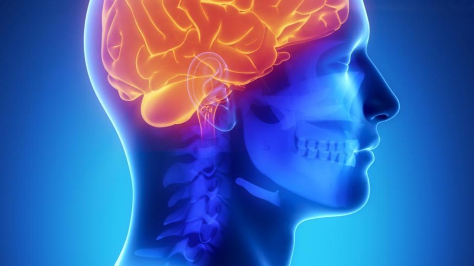 Openingsbeeld van een menselijk brein bij bericht over kuddegedrag en wantrouwen.