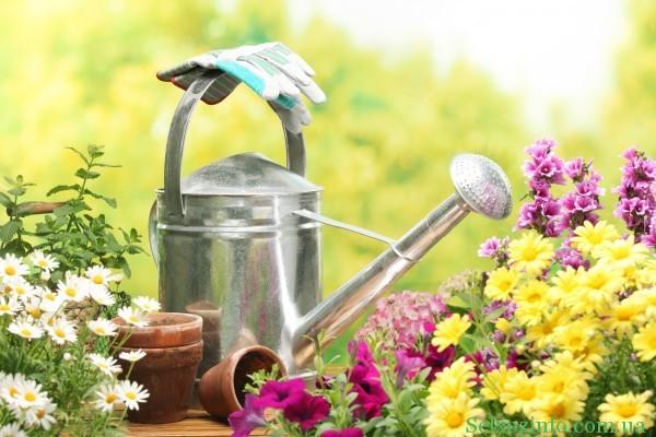 бизнес идея выращивание цветов