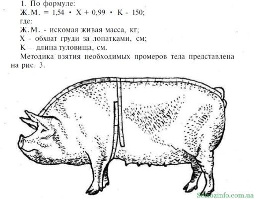 узнать живой вес свиньи по формуле