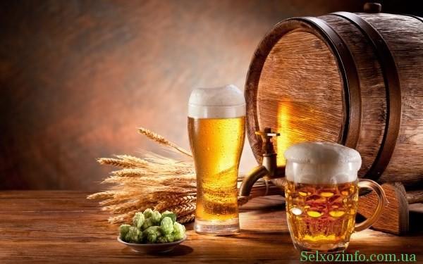 бизнес идея пиво на разлив
