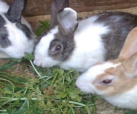 Заготавливаем корма для кроликов правильно