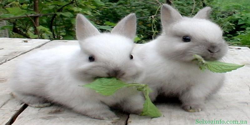 Заготовка кормов для кроликов на зиму