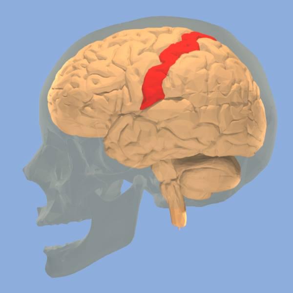 Resultado de imagen para síndrome del miembro fantasma