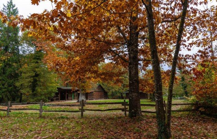 Bosque de Orgi navarra Excursiones