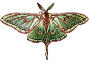 Excursión mariposas Ilundain