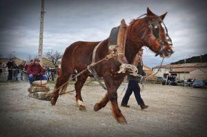 Ferias de febrero en Tafalla