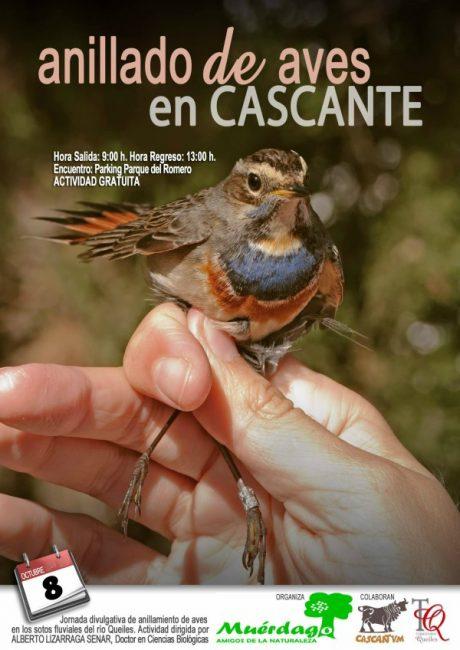 anillamiento,aves,Cascante