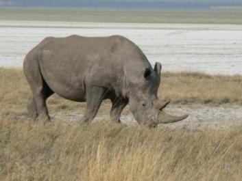 semestafakta-Etosha National Park3