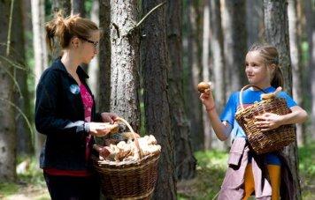 semestafakta-mushroom picking3