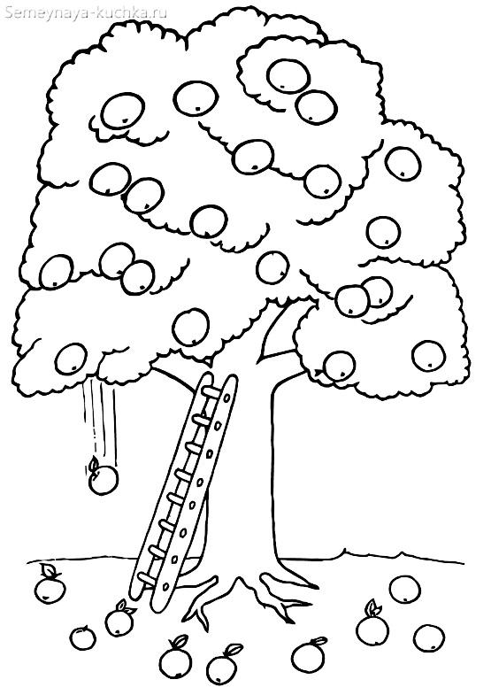 Mewarnai Pohon Maple Tanpa Daun Template Daun 100 Gambar Dan Stensil