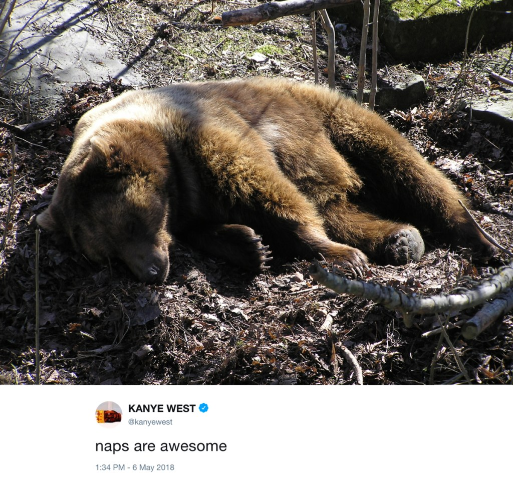naps are awesome - kanye west tweets with photos of bears
