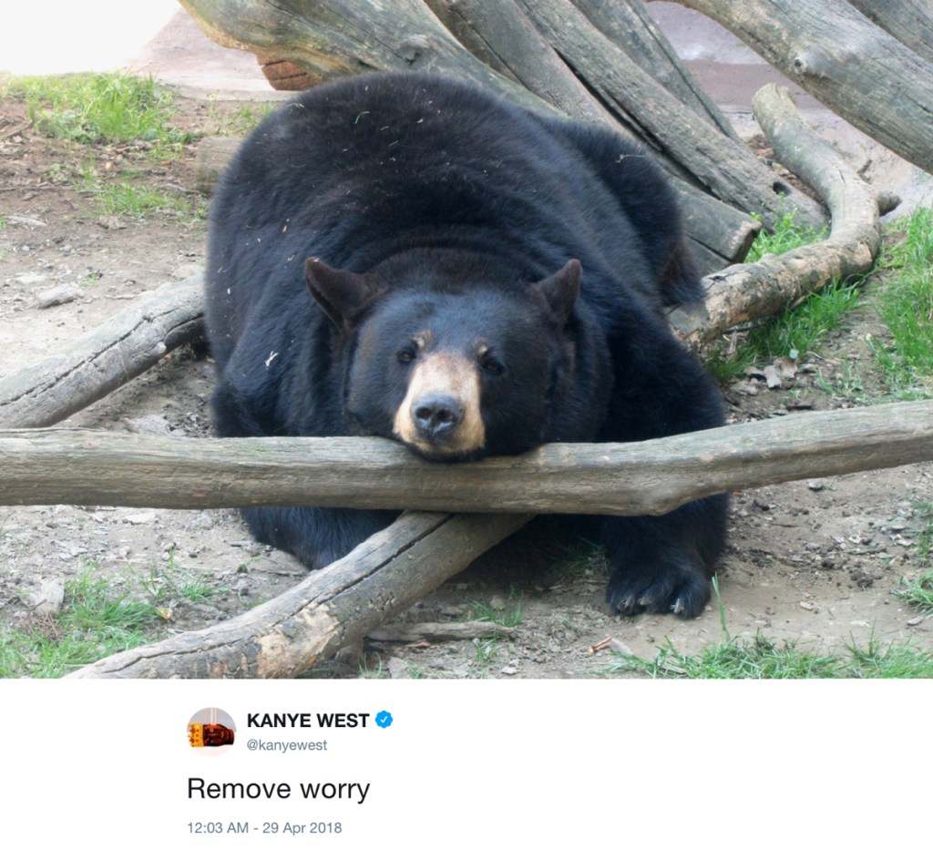 remove worry - kanye west tweets with photos of bears