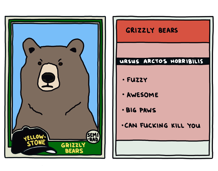 drawing of a yellowstone grizzly bear that can kill you
